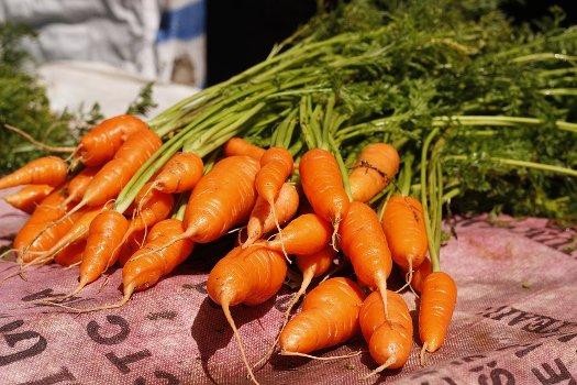 sformato di carote vivere vegano