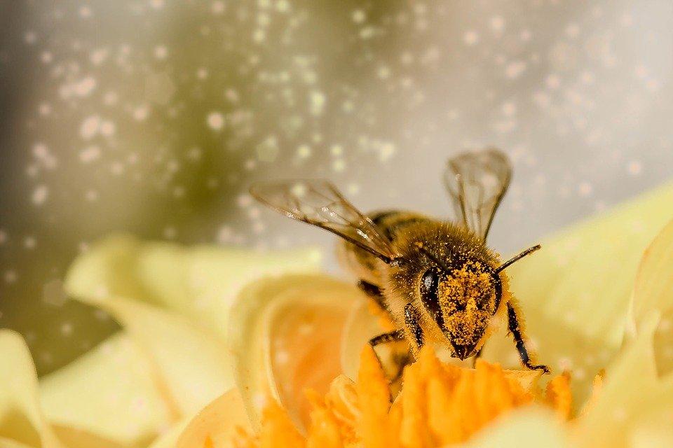 perchè il miele non è vegano