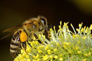 corridoio per api in inghilterra
