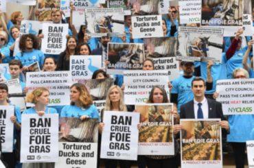new york vieta la vendita di fois gras